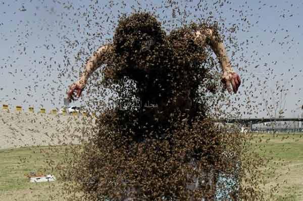 504 واژه ضروری انگلیسی - معنی واژه swarm با استفاده از عکس و تصاویر