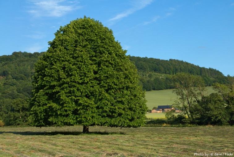 درخت نمدار